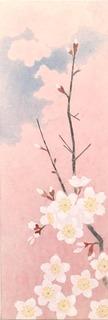 桜空WSM.jpg