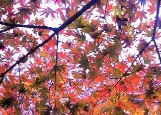 秋の模様.jpg
