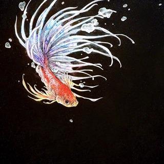 hiduki-crowntail.jpg